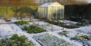 winter_veg_garden